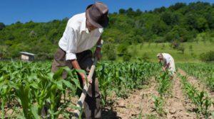 trattore-agricoltura-campagna-contadino-natura-625x350