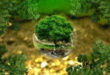 resilienza: 10 modi per costruire l'albero della resilienza