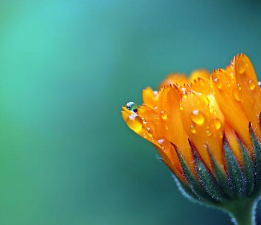 Il valore dell'umiltà come antidoto contro i veleni esistenziali